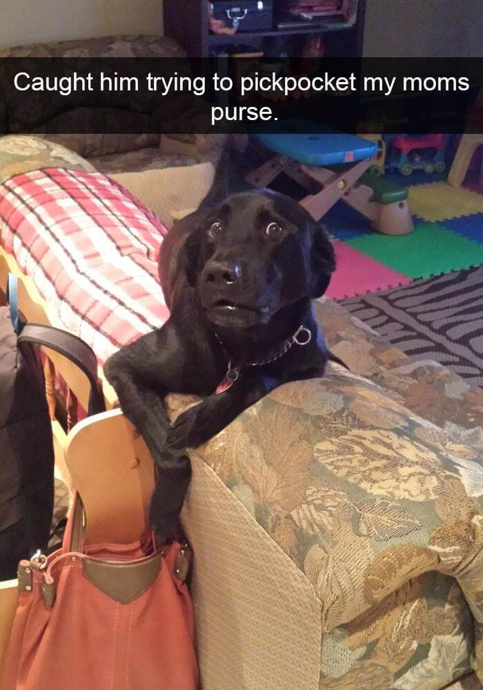 Pickpocket Doggie