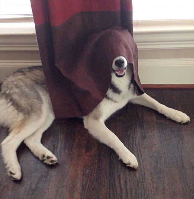 Shhhh Im Hiding