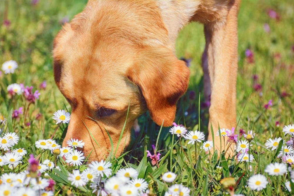 Dogs Sense Of Smell Is Stronger Than A Humans